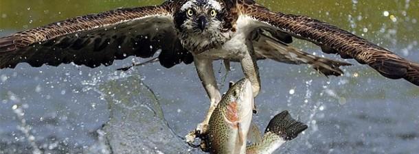 orel_fish